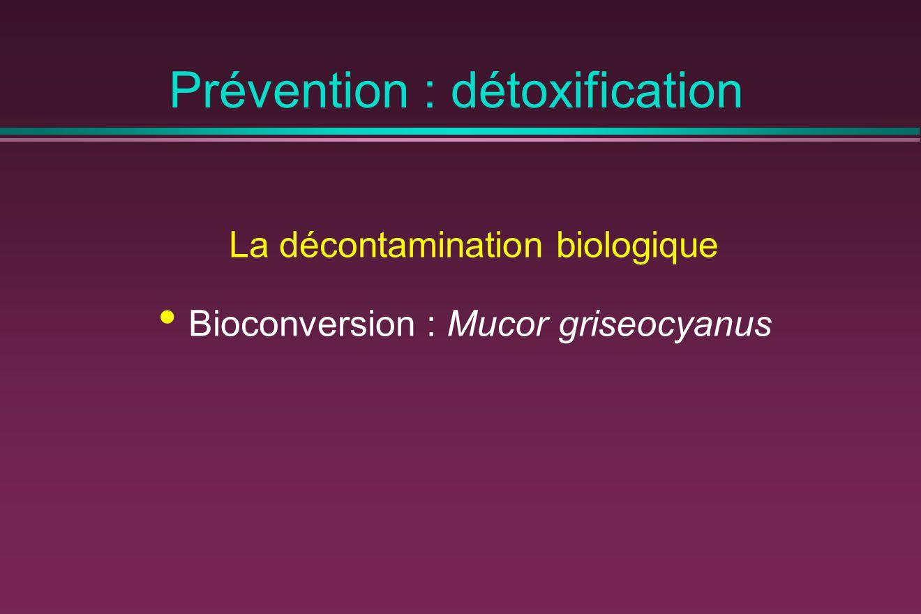 Prévention : détoxification La décontamination biologique Bioconversion : Mucor griseocyanus