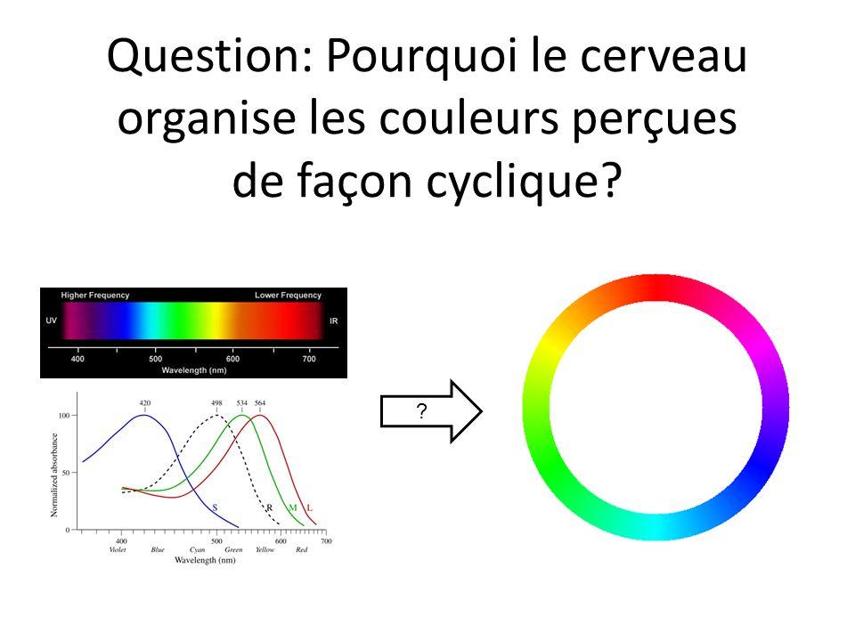 Question: Pourquoi le cerveau organise les couleurs perçues de façon cyclique? ?