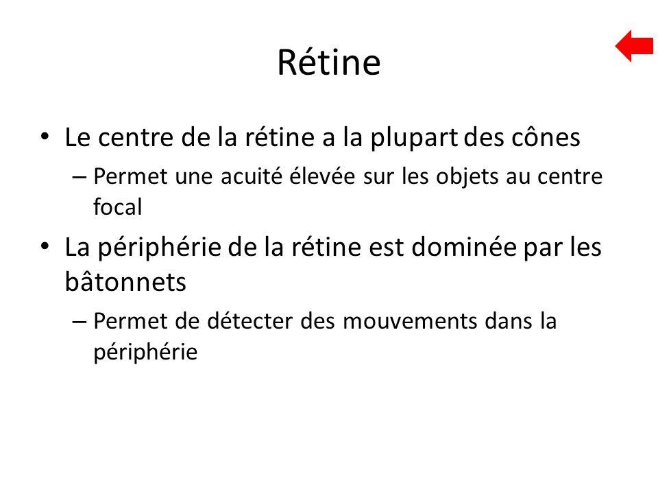 Rétine Le centre de la rétine a la plupart des cônes – Permet une acuité élevée sur les objets au centre focal La périphérie de la rétine est dominée