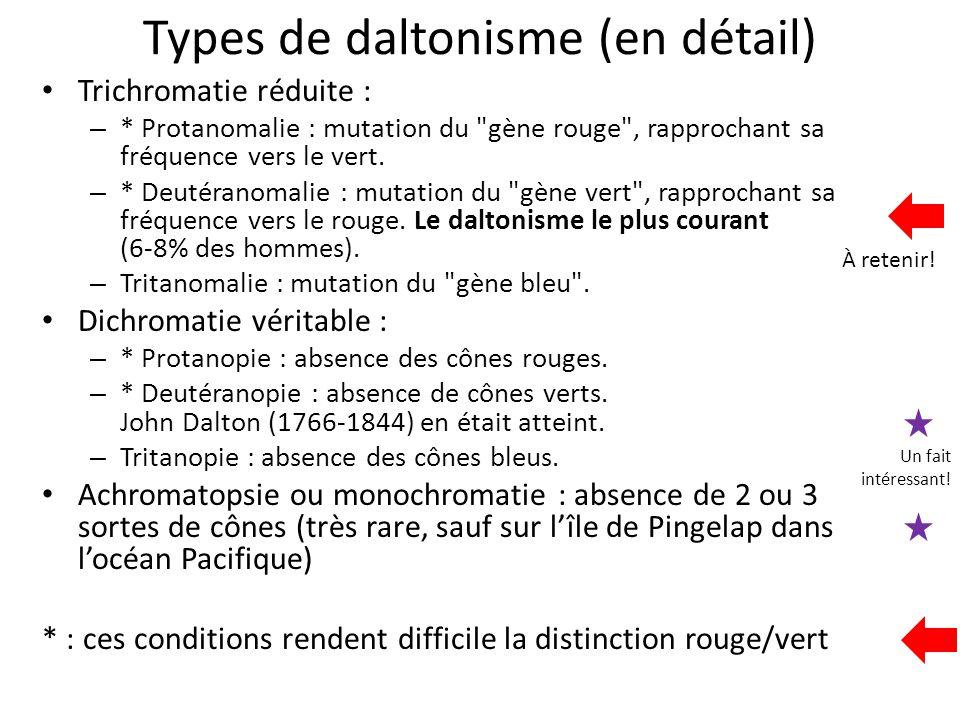 Types de daltonisme (en détail) Trichromatie réduite : – * Protanomalie : mutation du
