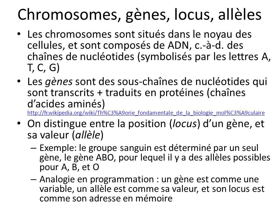Chromosomes, gènes, locus, allèles Les chromosomes sont situés dans le noyau des cellules, et sont composés de ADN, c.-à-d. des chaînes de nucléotides