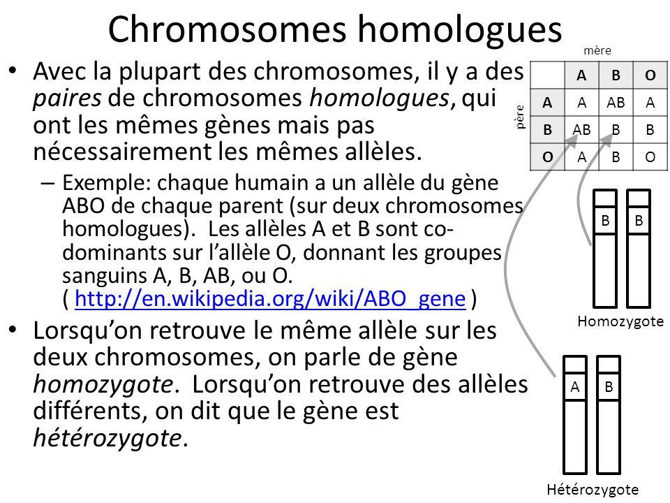 Chromosomes homologues Avec la plupart des chromosomes, il y a des paires de chromosomes homologues, qui ont les mêmes gènes mais pas nécessairement l