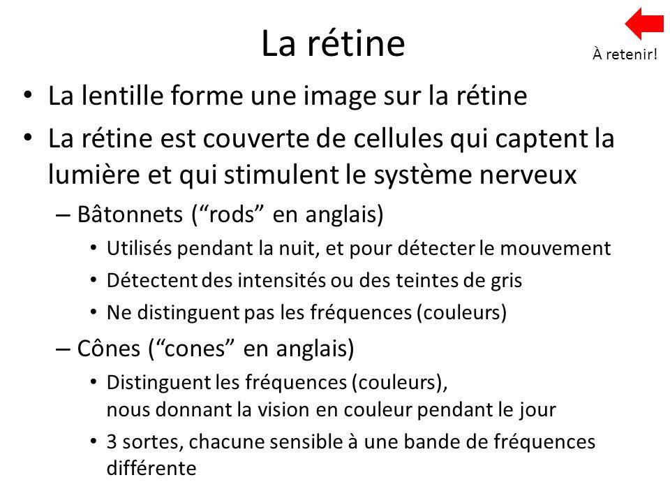 La rétine La lentille forme une image sur la rétine La rétine est couverte de cellules qui captent la lumière et qui stimulent le système nerveux – Bâ
