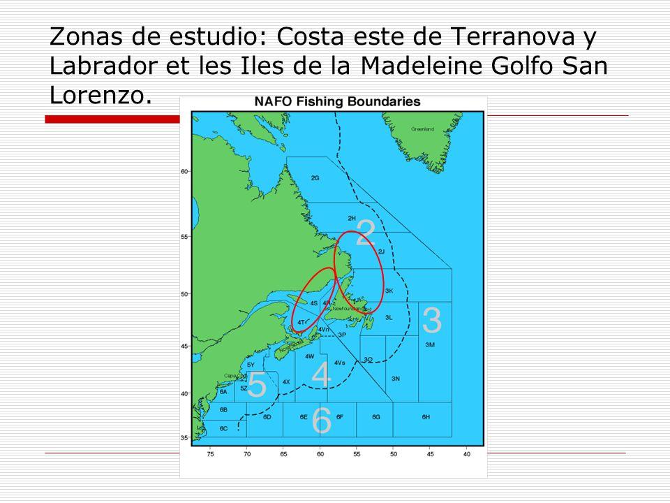 Zonas de estudio: Costa este de Terranova y Labrador et les Iles de la Madeleine Golfo San Lorenzo.