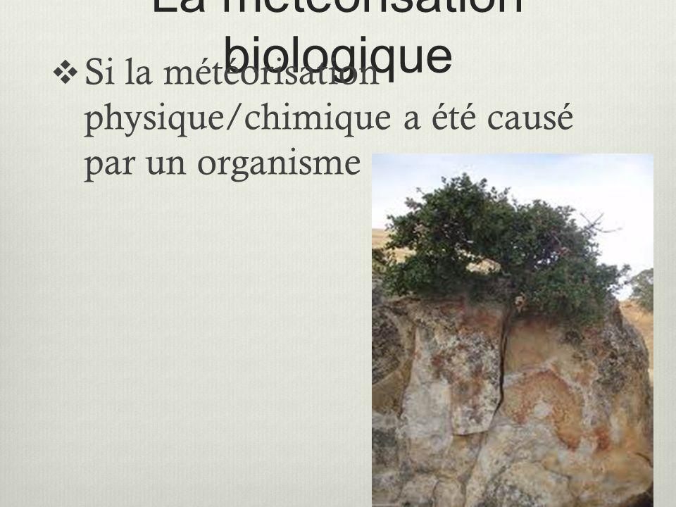 La météorisation biologique  Si la météorisation physique/chimique a été causé par un organisme