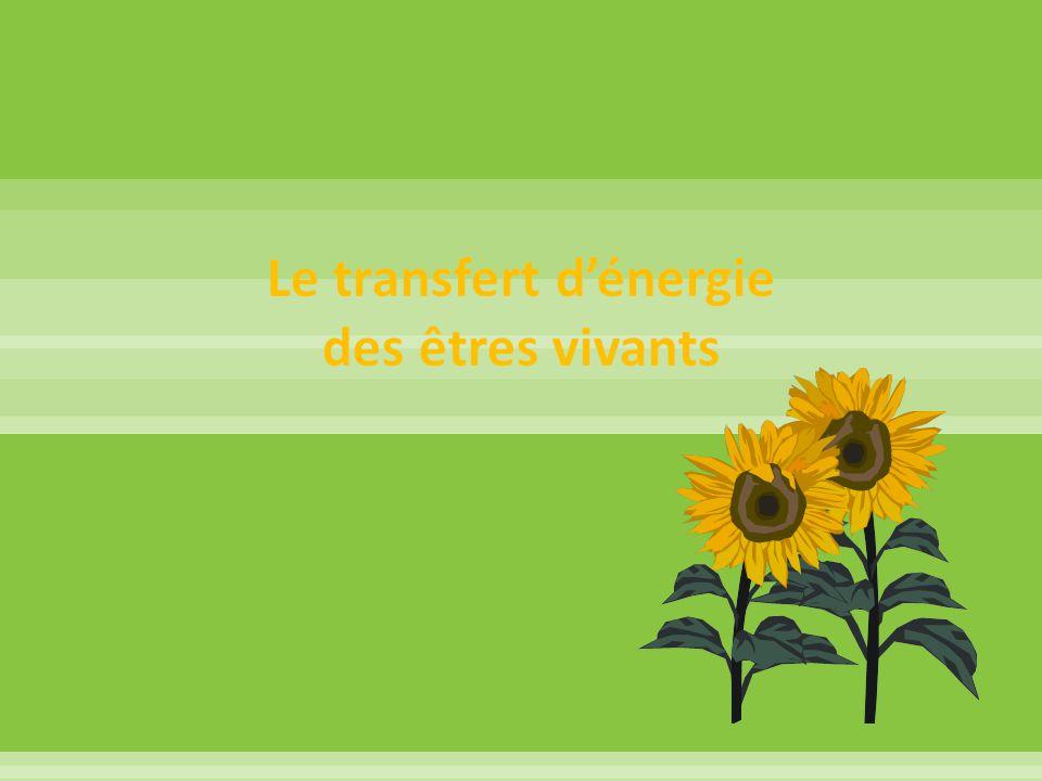 Objectifs: - Reconnaitre que la plus grande partie de l'énergie des plantes provient du soleil.