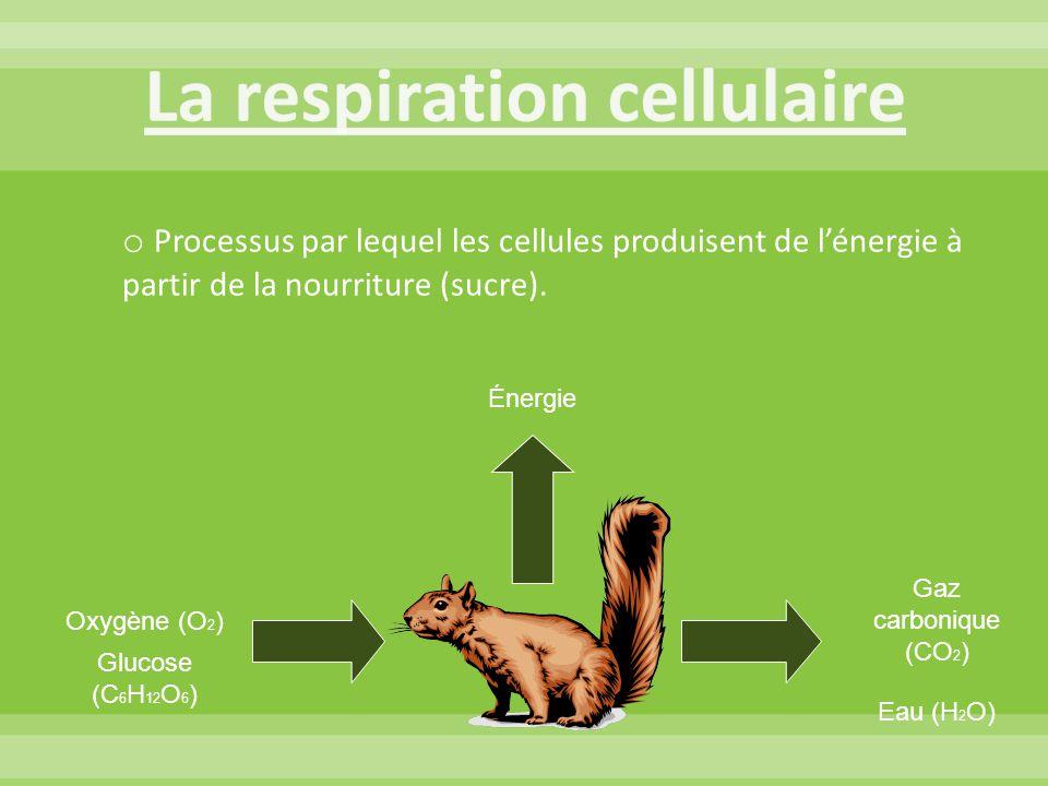 Oxygène (O 2 ) Glucose (C 6 H 12 O 6 ) Gaz carbonique (CO 2 ) Eau (H 2 O) Énergie o Processus par lequel les cellules produisent de l'énergie à partir