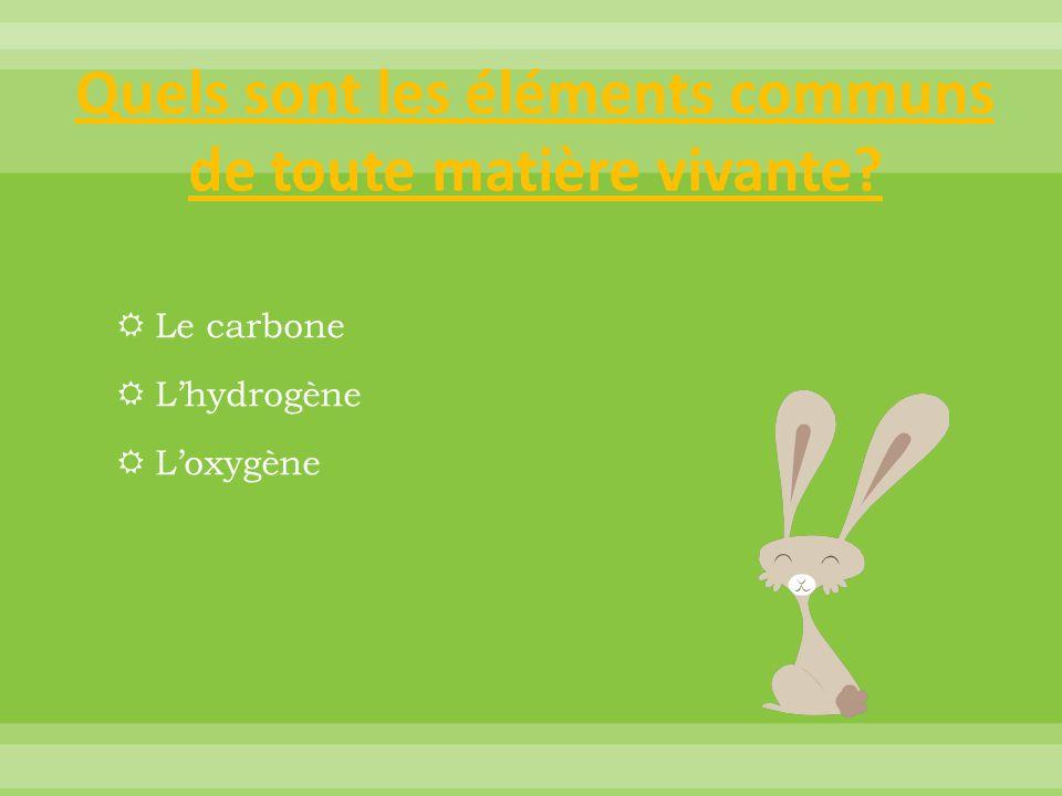 Quels sont les éléments communs de toute matière vivante?  Le carbone  L'hydrogène  L'oxygène