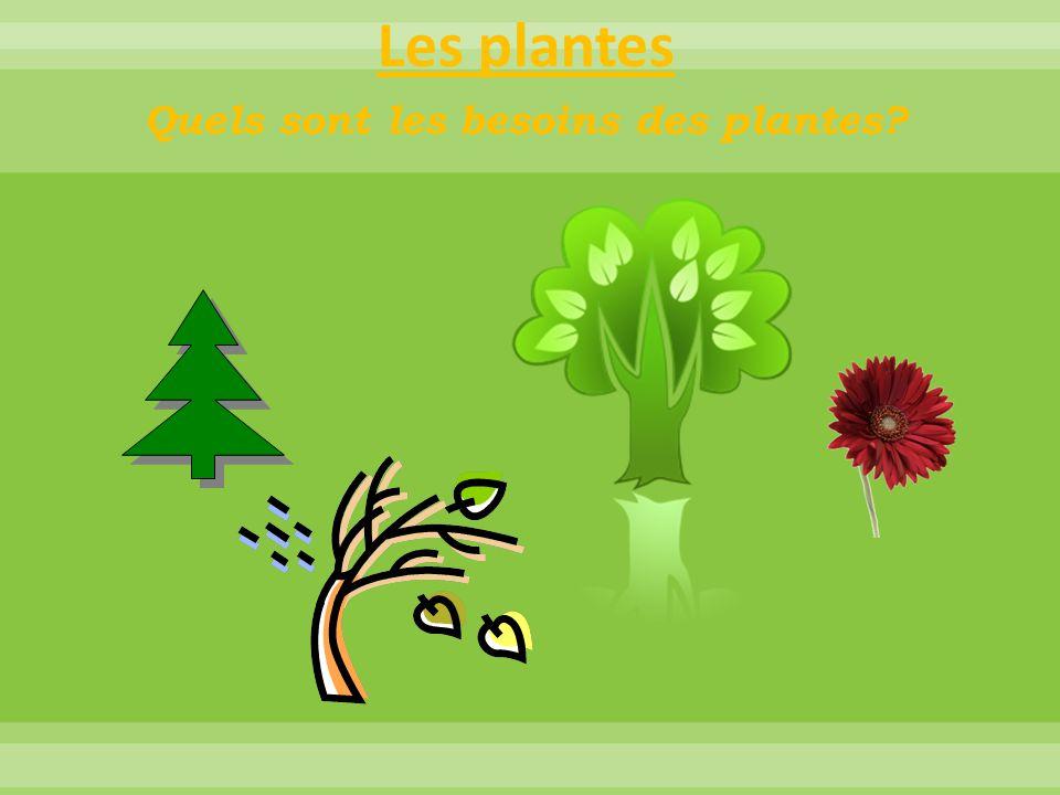 Les plantes Quels sont les besoins des plantes?  *** Essentiel, sans soleil pas de développement.  Du dioxyde de carbone Pour quelle raison ont-elle