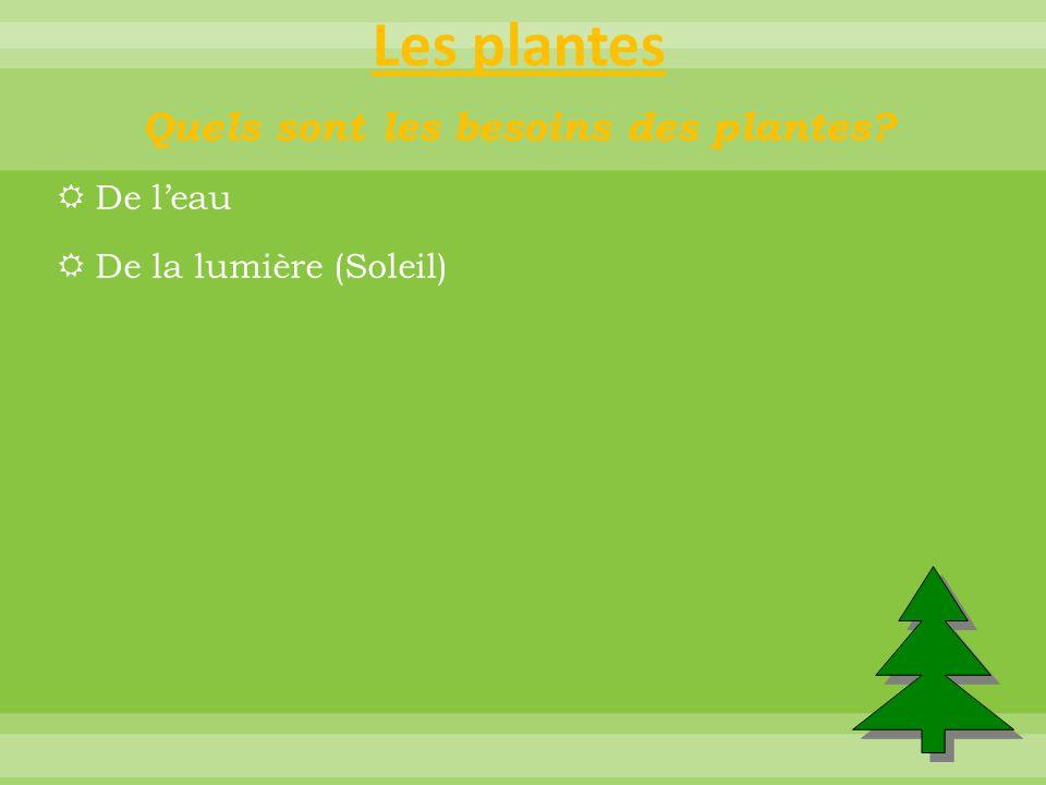 Les plantes Quels sont les besoins des plantes?  De l'eau  De la lumière (Soleil)  *** Essentiel, sans soleil pas de développement.  Du dioxyde de