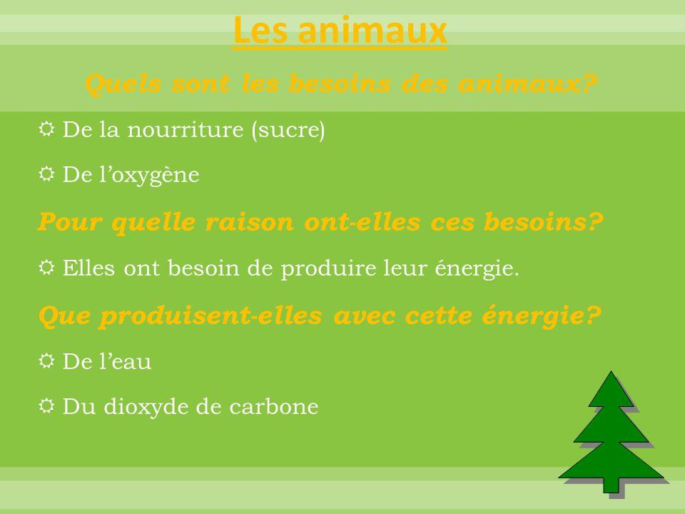 Résumé Comment peut-on résumer en une phrase l'énergie des animaux.