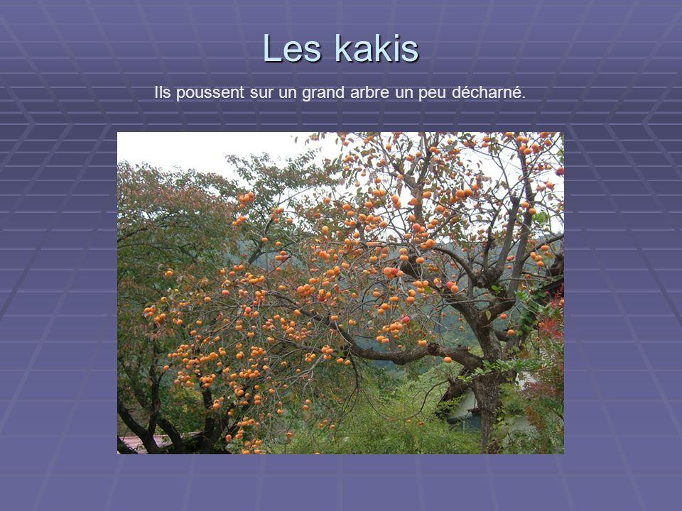 Les kakis Ils poussent sur un grand arbre un peu décharné.
