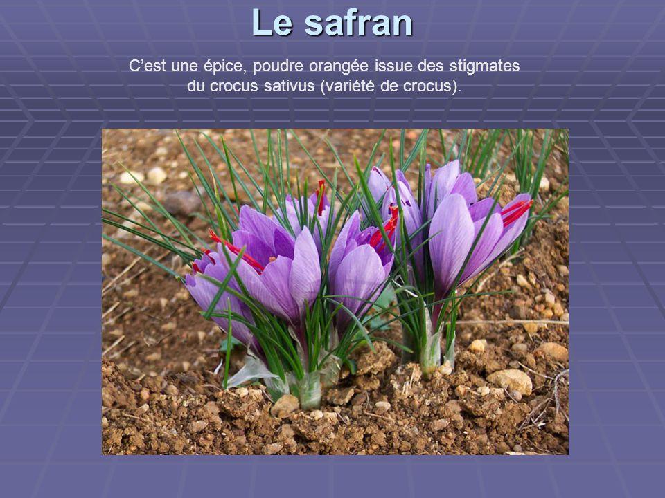 Le safran Le safran C'est une épice, poudre orangée issue des stigmates du crocus sativus (variété de crocus).