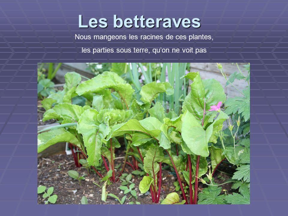 Les betteraves Nous mangeons les racines de ces plantes, les parties sous terre, qu'on ne voit pas