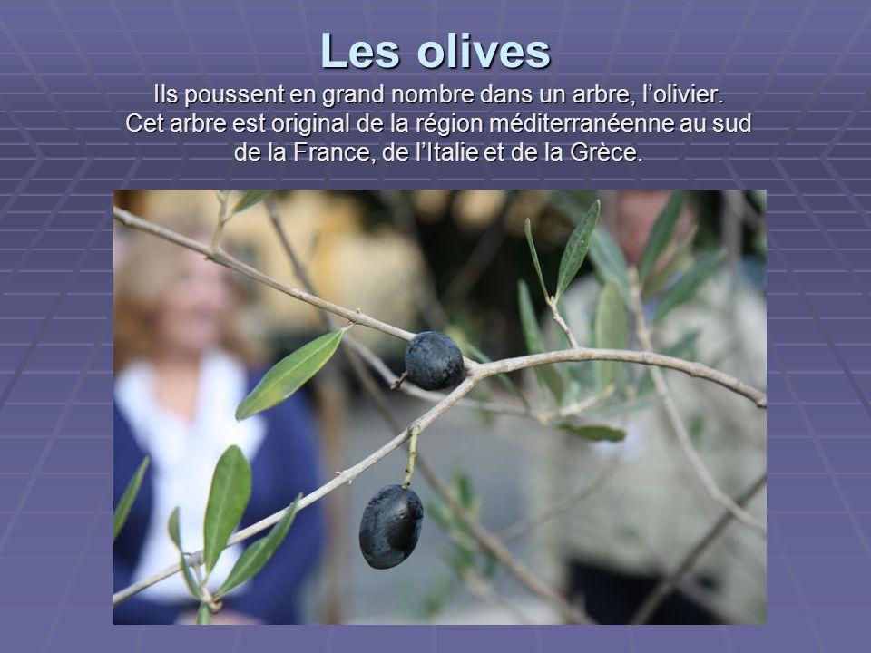 Les olives Ils poussent en grand nombre dans un arbre, l'olivier.