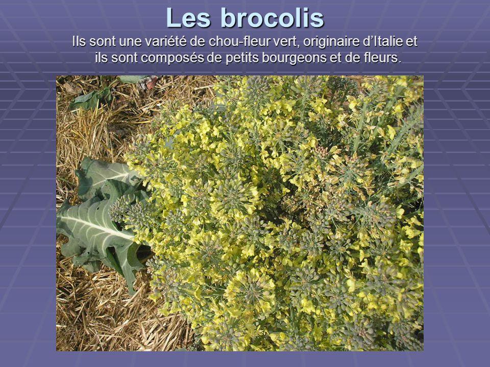 Les brocolis Ils sont une variété de chou-fleur vert, originaire d'Italie et ils sont composés de petits bourgeons et de fleurs.