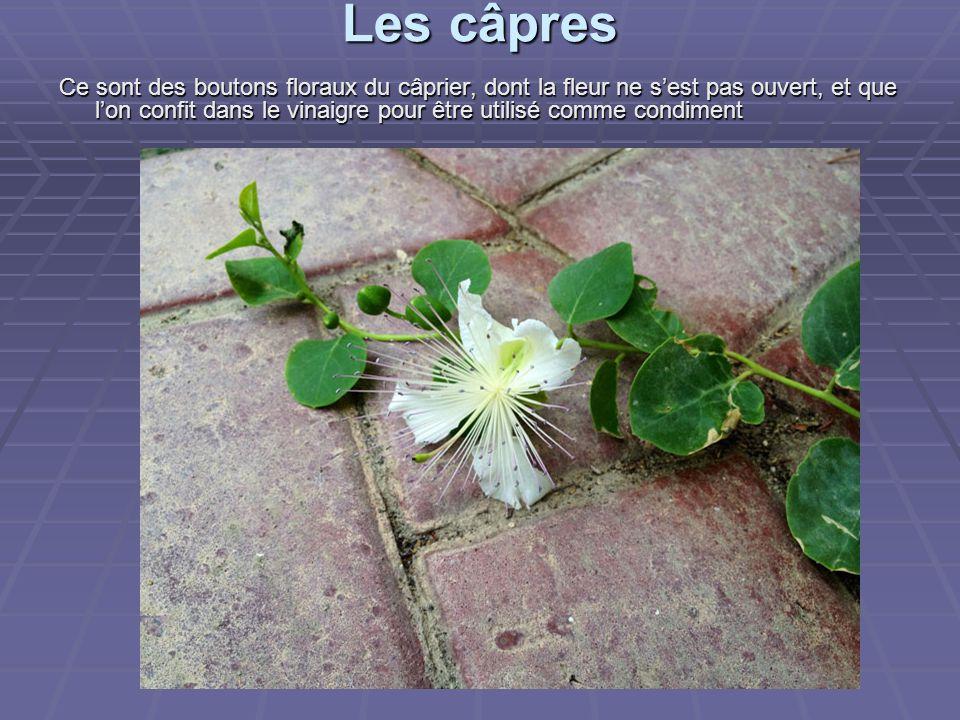 Les câpres Ce sont des boutons floraux du câprier, dont la fleur ne s'est pas ouvert, et que l'on confit dans le vinaigre pour être utilisé comme condiment