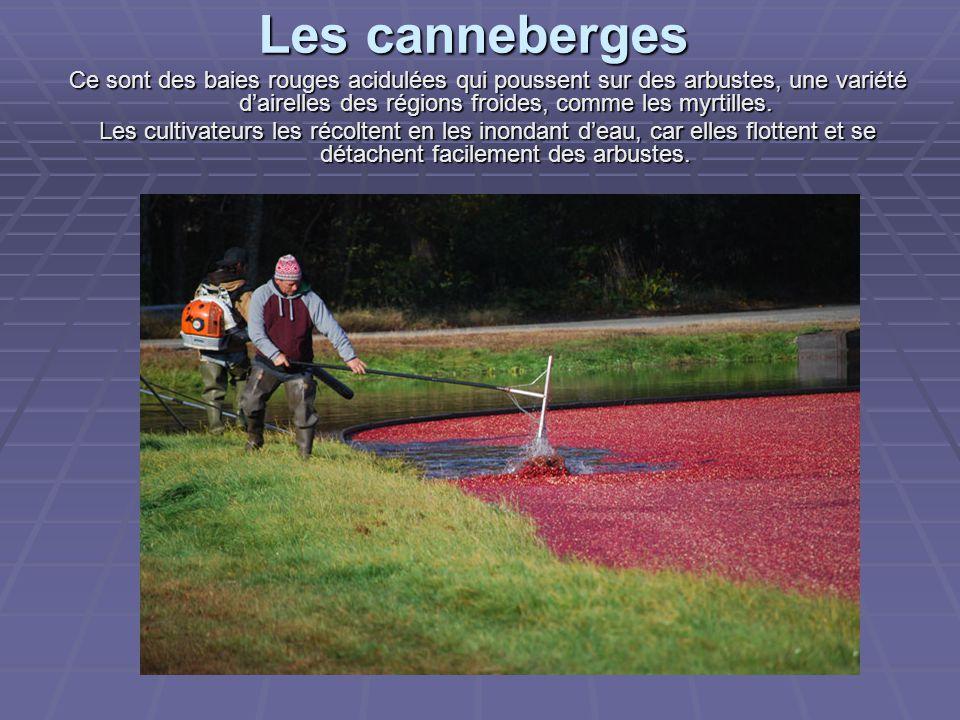Les canneberges Ce sont des baies rouges acidulées qui poussent sur des arbustes, une variété d'airelles des régions froides, comme les myrtilles.