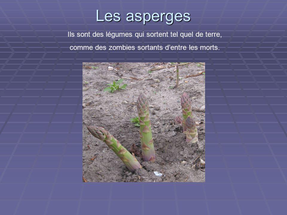 Les asperges Ils sont des légumes qui sortent tel quel de terre, comme des zombies sortants d'entre les morts.