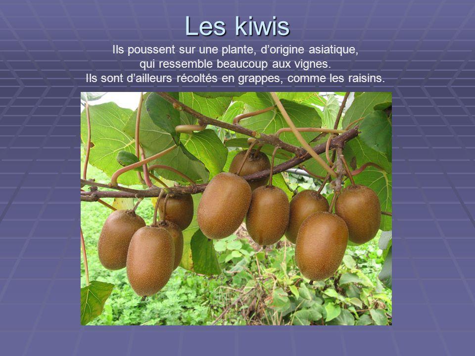 Les kiwis Ils poussent sur une plante, d'origine asiatique, qui ressemble beaucoup aux vignes.