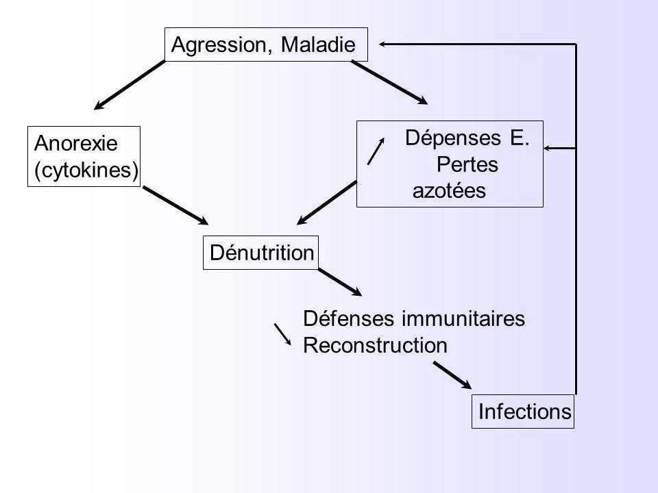Agression, Maladie Anorexie (cytokines) Dépenses E. Pertes azotées Dénutrition Défenses immunitaires Reconstruction Infections