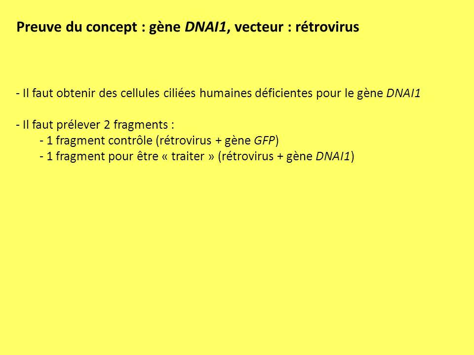 Preuve du concept : gène DNAI1, vecteur : rétrovirus - Il faut obtenir des cellules ciliées humaines déficientes pour le gène DNAI1 - Il faut prélever