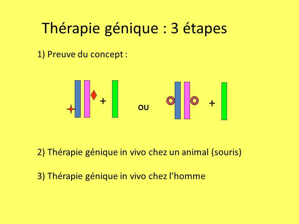 Thérapie génique : 3 étapes + + OU 1) Preuve du concept : 2) Thérapie génique in vivo chez un animal (souris) 3) Thérapie génique in vivo chez l'homme
