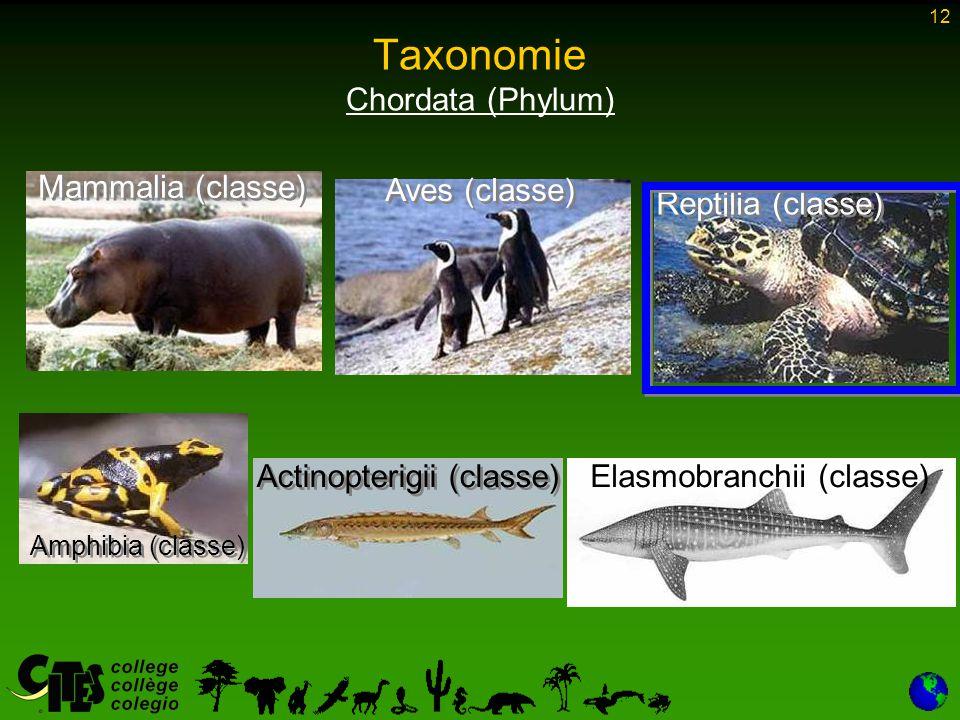 12 Taxonomie Chordata (Phylum) Mammalia (classe) Aves (classe) Reptilia (classe) Actinopterigii (classe) Amphibia (classe) Elasmobranchii (classe)