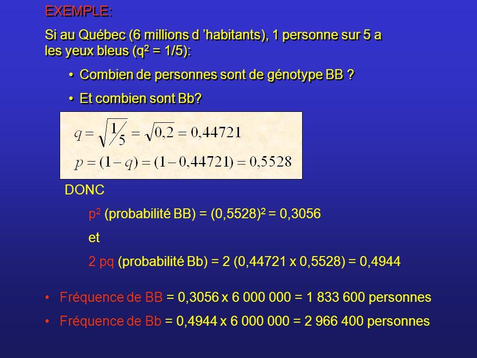 EXEMPLE: Si au Québec (6 millions d 'habitants), 1 personne sur 5 a les yeux bleus (q 2 = 1/5): Combien de personnes sont de génotype BB ? Et combien