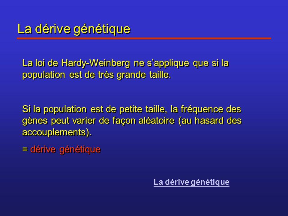 La dérive génétique La loi de Hardy-Weinberg ne s'applique que si la population est de très grande taille. Si la population est de petite taille, la f