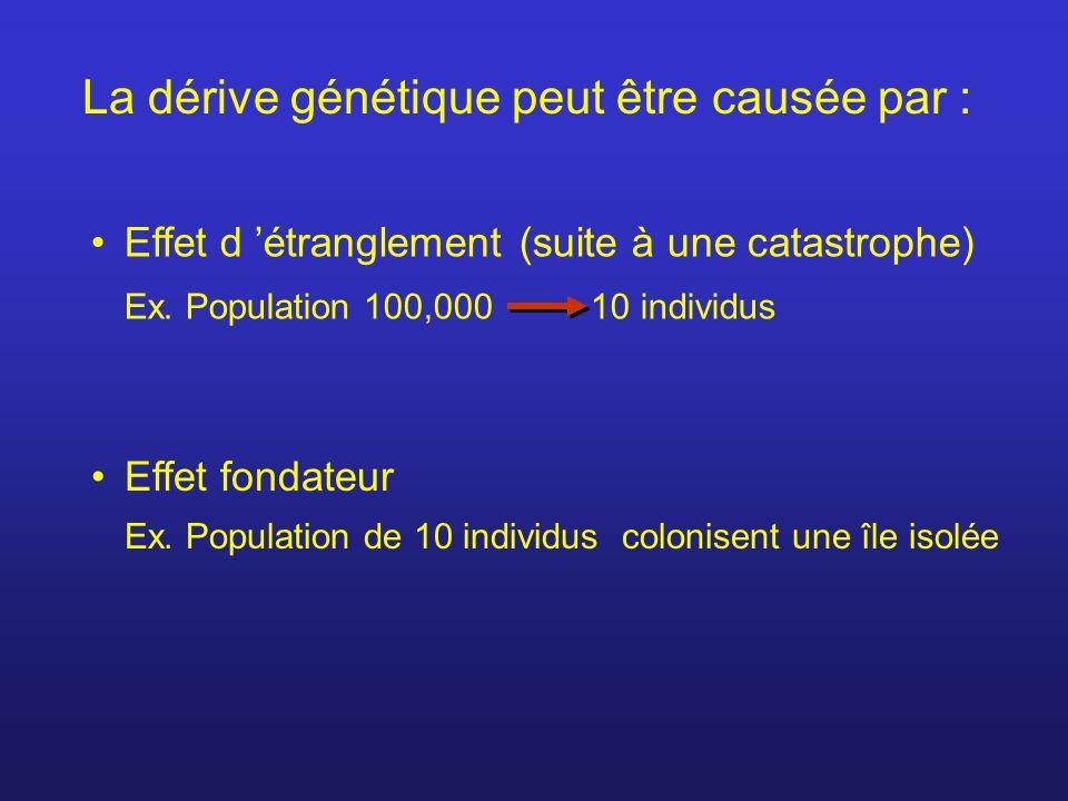 La dérive génétique peut être causée par : Effet d 'étranglement (suite à une catastrophe) Ex. Population 100,000 10 individus Effet fondateur Ex. Pop