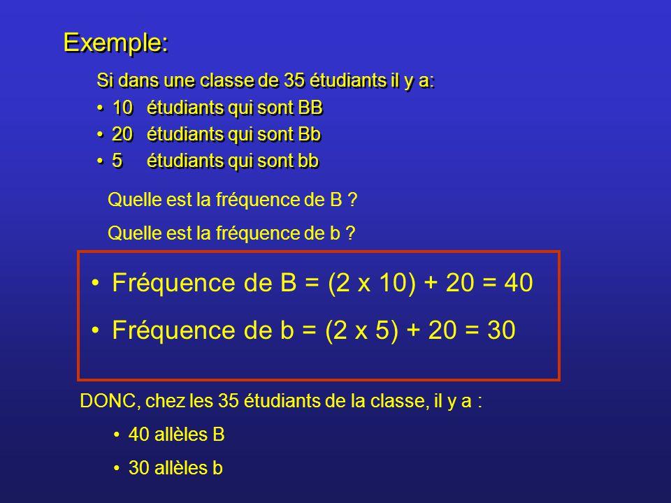Probabilité de présence d'un allèle dans la population Exemple: si dans la classe on a : 40 allèles B 30 allèles b Total = 70 allèles Probabilité de présence de l'allèle B dans la population = 40 / 70 = 0,5714 Probabilité de présence de l'allèle b dans la population = 30 / 70 = 0,4286 p = probabilité de l'allèle B = 0,5714 q = probabilité de l'allèle b = 0,4286 p + q = 0,5714 + 0,4286 = 1