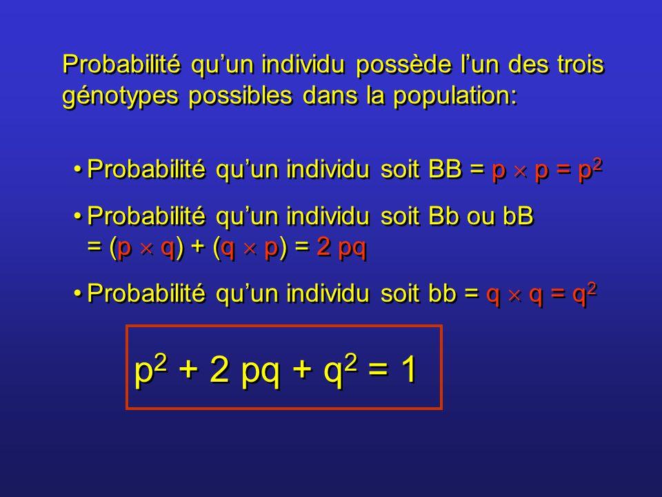 Exemple: Si fréquence de B = 0,6 Si fréquence de b = 0,4 Alors on aura Exemple: Si fréquence de B = 0,6 Si fréquence de b = 0,4 Alors on aura p 2 BB soit (0,6) 2 = 0,36 2 pq Bb soit 2 (0,6 x 0,4) = 0,48 q 2 bb soit (0,4) 2 = 0,16 p 2 BB soit (0,6) 2 = 0,36 2 pq Bb soit 2 (0,6 x 0,4) = 0,48 q 2 bb soit (0,4) 2 = 0,16 Dans une population de 1 000 000 individus on devrait avoir: (0,36 x 1 000 000) = 360 000 BB (0,48 x 1 000 000) = 480 000 Bb (0,16 x 1 000 000) = 160 000 bb
