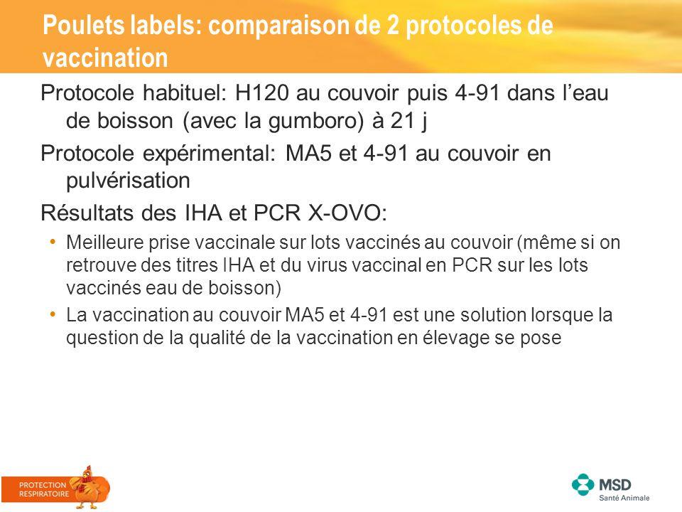Poulets labels: comparaison de 2 protocoles de vaccination Protocole habituel: H120 au couvoir puis 4-91 dans l'eau de boisson (avec la gumboro) à 21