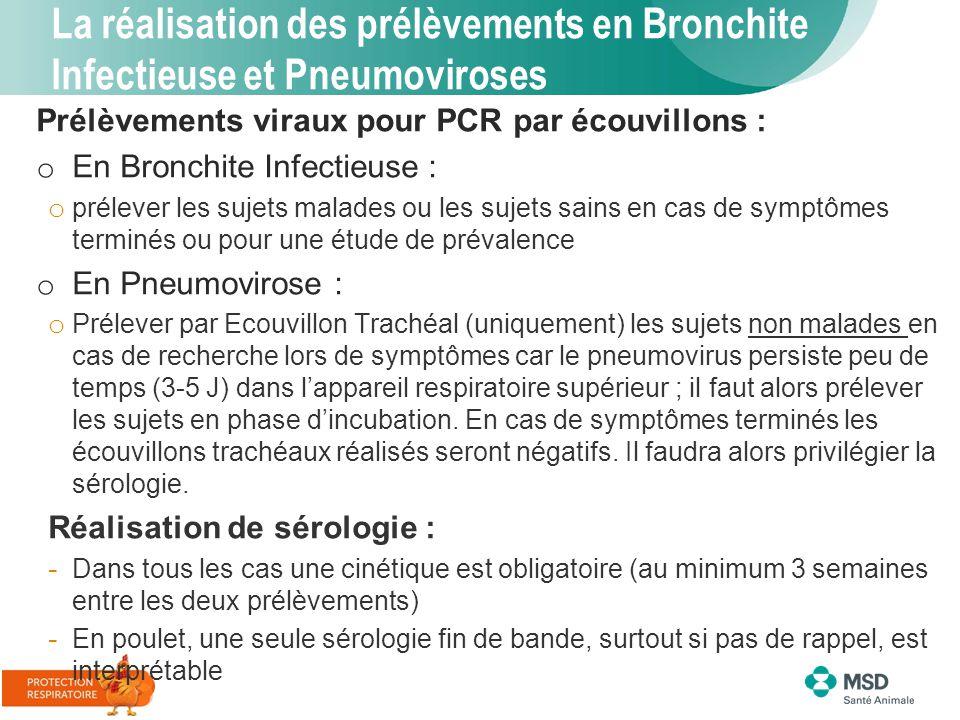 La réalisation des prélèvements en Bronchite Infectieuse et Pneumoviroses Prélèvements viraux pour PCR par écouvillons : o En Bronchite Infectieuse :