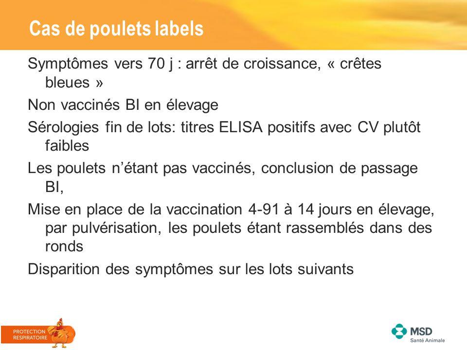 Cas de poulets labels Symptômes vers 70 j : arrêt de croissance, « crêtes bleues » Non vaccinés BI en élevage Sérologies fin de lots: titres ELISA pos