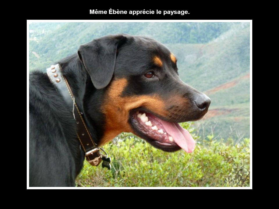 Même Ébène apprécie le paysage.