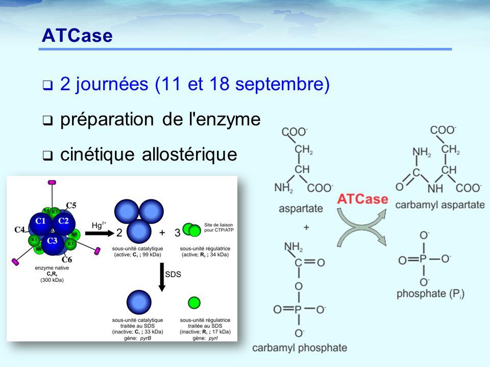 ATCase  2 journées (11 et 18 septembre)  préparation de l enzyme  cinétique allostérique