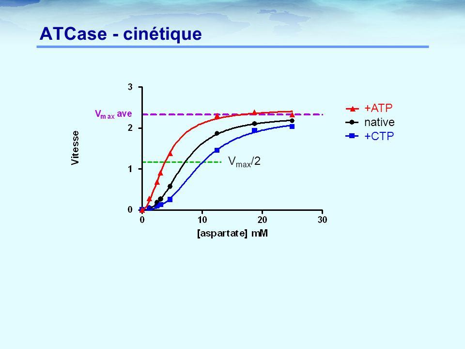 ATCase - cinétique V max /2 +ATP native +CTP