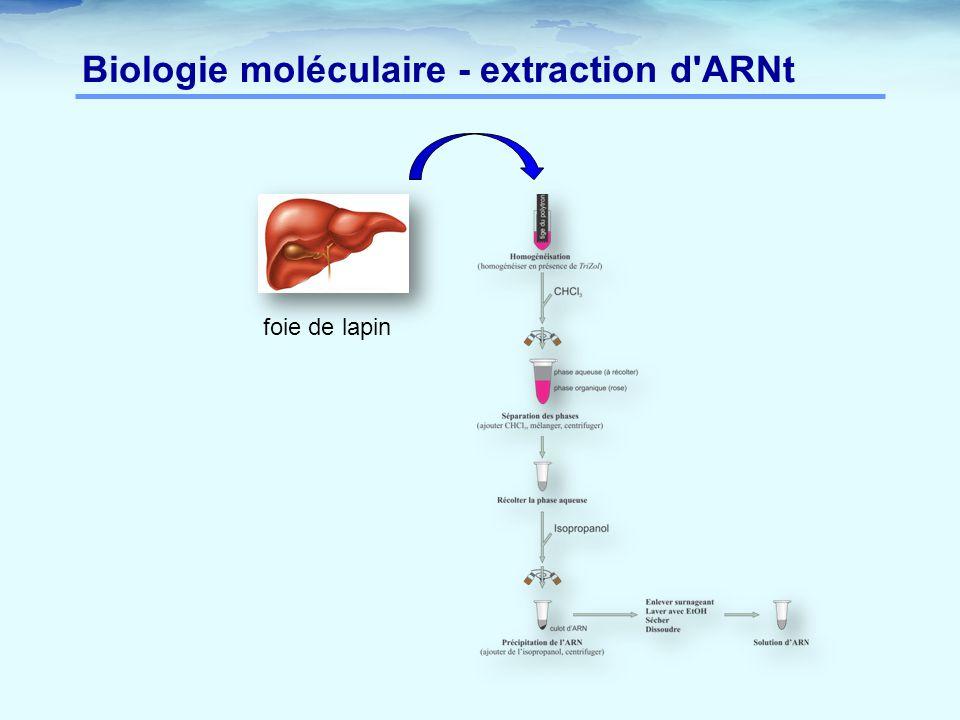 Biologie moléculaire - extraction d ARNt foie de lapin