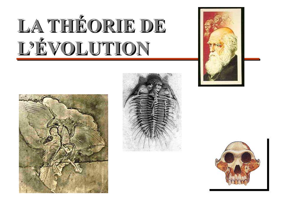 Facteurs de l'évolution Selection naturelle 1 Mutation fortuite 2,3 Dérive gènètique 4 1 Darwin, 1856; 2 Muller, 1926; 3 Luria, 1943; 4 Wright, 1945; 5 Monod, 1969 L'hasard et la nècessitè 5