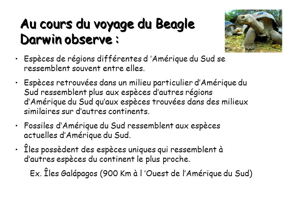Au cours du voyage du Beagle Darwin observe : Espèces de régions différentes d 'Amérique du Sud se ressemblent souvent entre elles.
