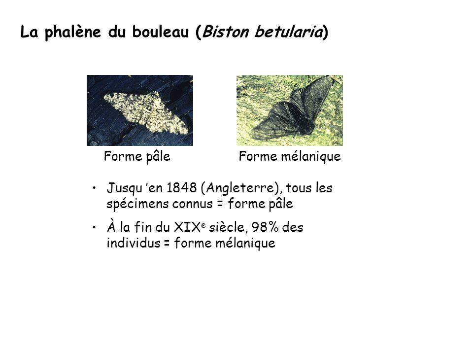 La phalène du bouleau (Biston betularia) Jusqu 'en 1848 (Angleterre), tous les spécimens connus = forme pâle À la fin du XIX e siècle, 98% des individus = forme mélanique Forme pâleForme mélanique
