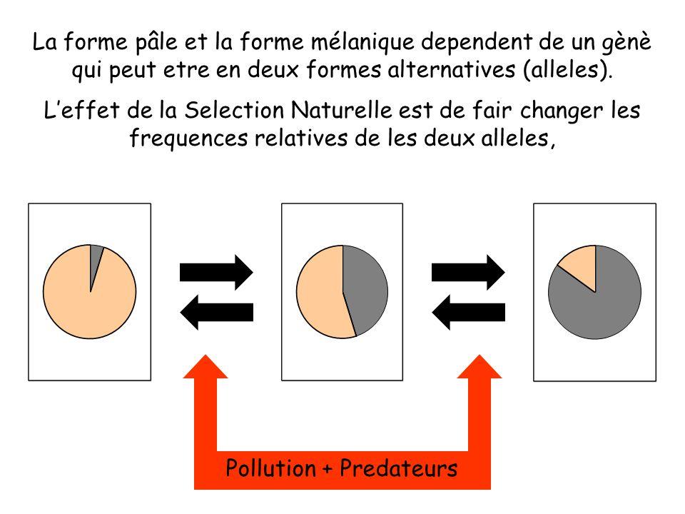 La forme pâle et la forme mélanique dependent de un gènè qui peut etre en deux formes alternatives (alleles).