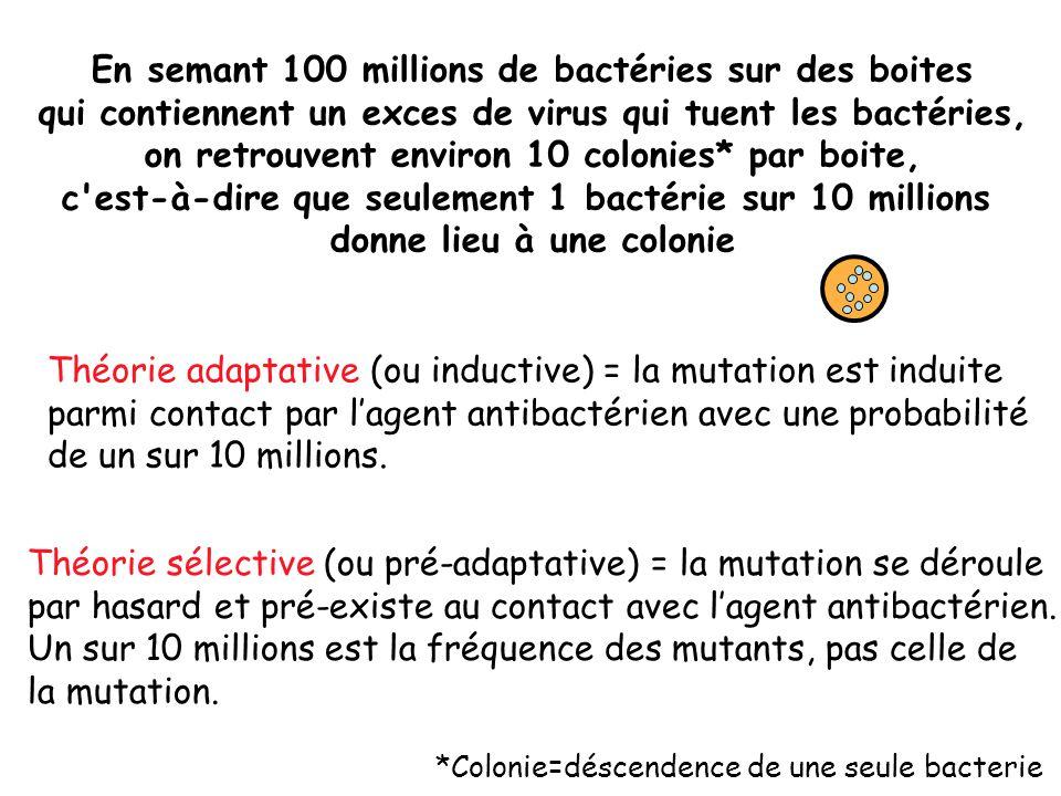 En semant 100 millions de bactéries sur des boites qui contiennent un exces de virus qui tuent les bactéries, on retrouvent environ 10 colonies* par boite, c est-à-dire que seulement 1 bactérie sur 10 millions donne lieu à une colonie Théorie adaptative (ou inductive) = la mutation est induite parmi contact par l'agent antibactérien avec une probabilité de un sur 10 millions.