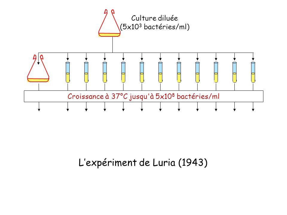 Culture diluée (5x10 3 bactéries/ml) Croissance à 37°C jusqu à 5x10 8 bactéries/ml L'expériment de Luria (1943)