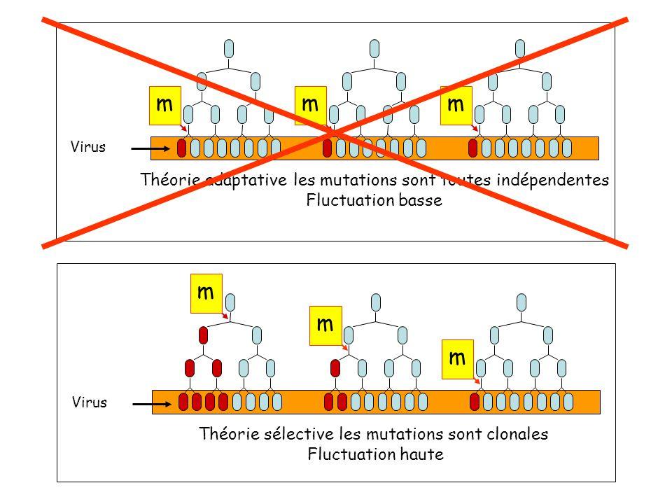 m m m Théorie sélective les mutations sont clonales Fluctuation haute Virus mm m Théorie adaptative les mutations sont toutes indépendentes Fluctuation basse Virus