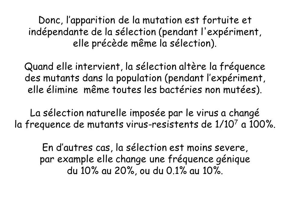 Donc, l'apparition de la mutation est fortuite et indépendante de la sélection (pendant l expériment, elle précède même la sélection).