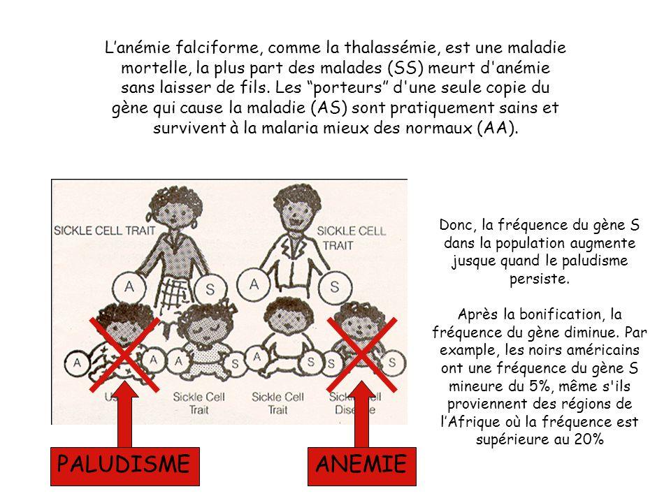 L'anémie falciforme, comme la thalassémie, est une maladie mortelle, la plus part des malades (SS) meurt d anémie sans laisser de fils.