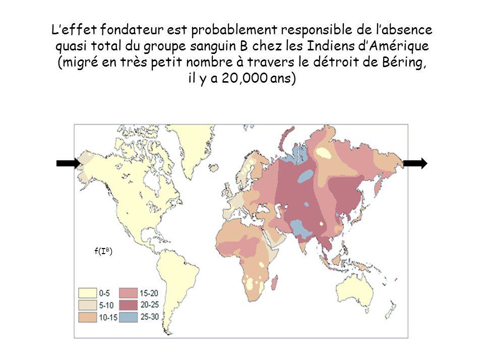 L'effet fondateur est probablement responsible de l'absence quasi total du groupe sanguin B chez les Indiens d'Amérique (migré en très petit nombre à travers le détroit de Béring, il y a 20,000 ans) f(I B )